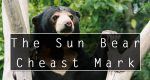 The Sun Bear Chest Mark