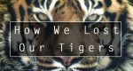 How & Why We Lost Our Tigers
